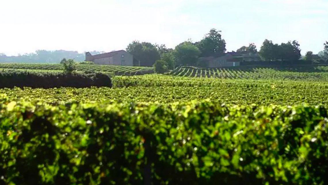 production audiovisuelle vin bordeaux